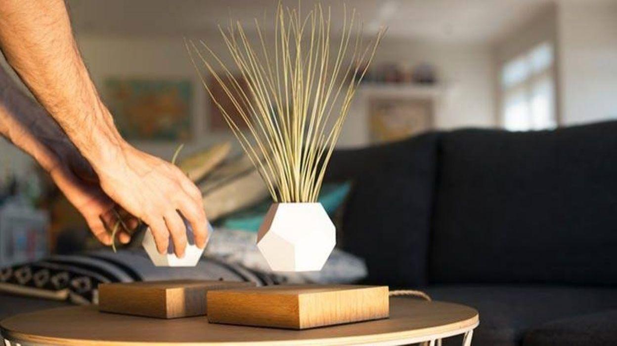 d co mettez vos plantes en l vitation avec lyfe. Black Bedroom Furniture Sets. Home Design Ideas